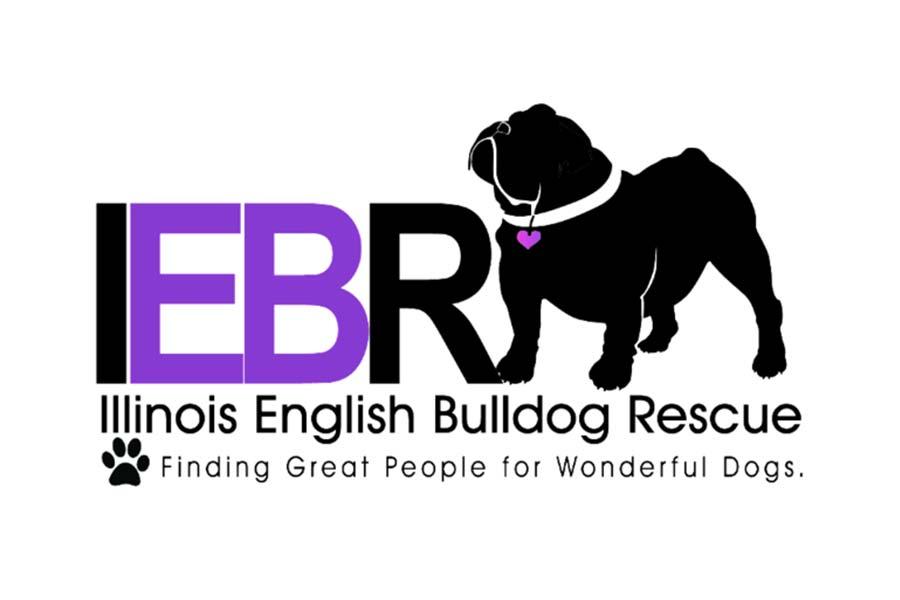 Illinois English Bulldog Rescue